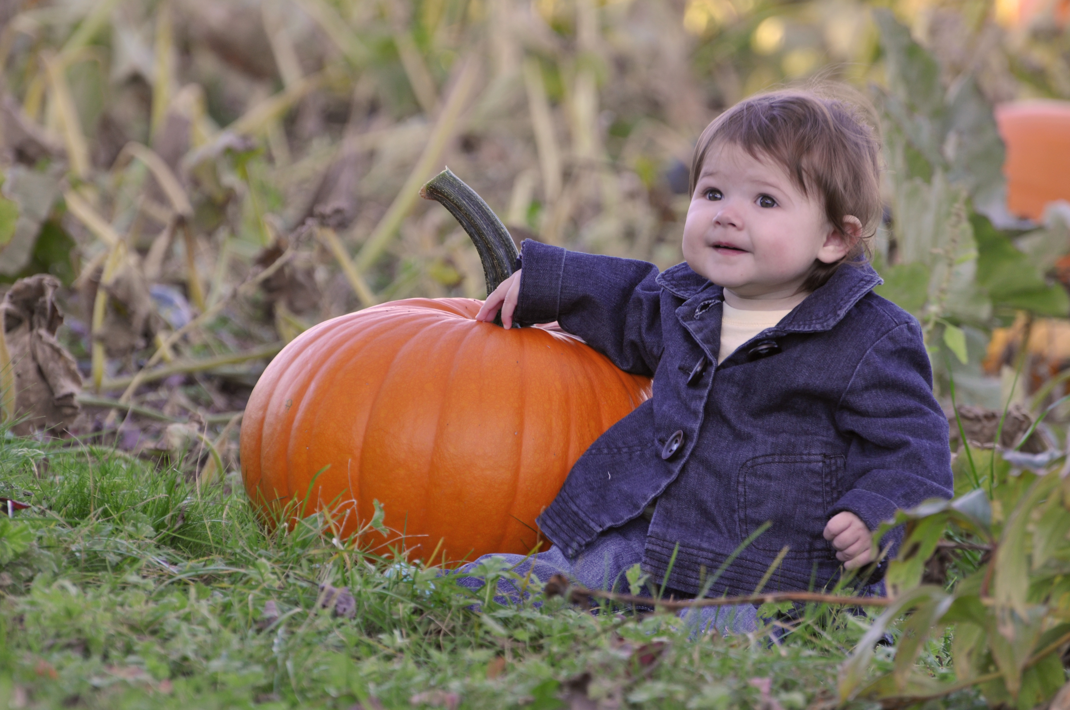 Elise and the Pumpkin.